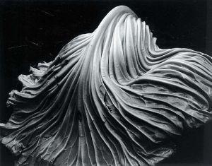 edward-westoncabbage-leaf-1931-1390139180_b